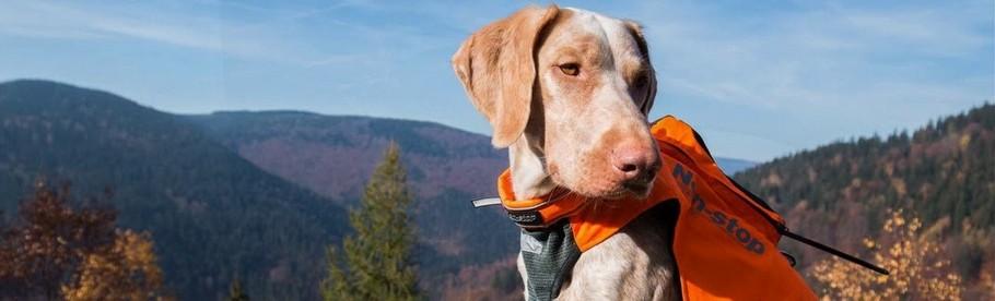 Dogtrace obojky a prijímače pre výcvik psov